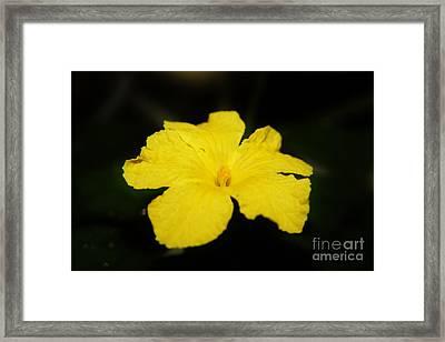Balsam Apple Flower Framed Print