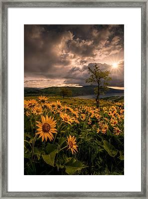 Balsamroot Heaven Framed Print