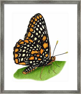 Baltimore Checkerspot Butterfly Framed Print by Roger Hall