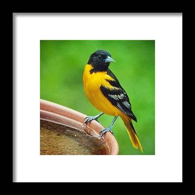 Ornithology Framed Prints