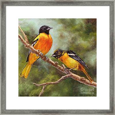 Baltimore Orioles Framed Print by Tom Chapman