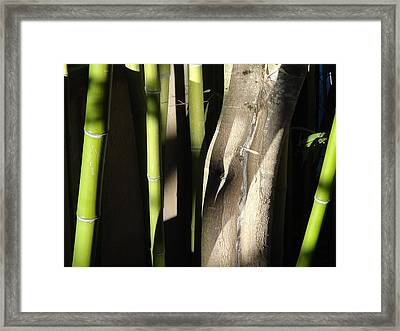 Bam  Boo  Framed Print by Shawn Marlow