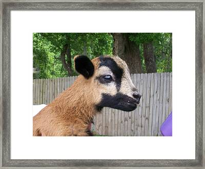 Framed Print featuring the photograph Bambi by Belinda Lee