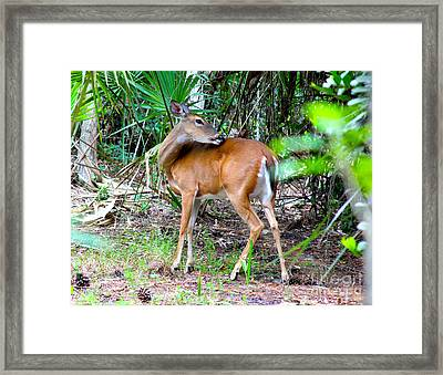 Bambi In The Brush Framed Print by Carey Chen