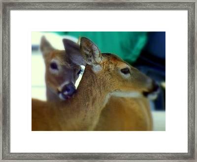 Bambi Framed Print by Karen Wiles