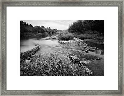 Bambi's Playground Framed Print by Davorin Mance