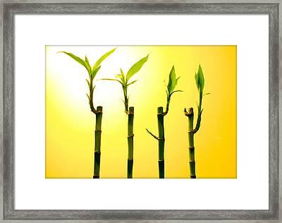 Bambo Framed Print by Mechi