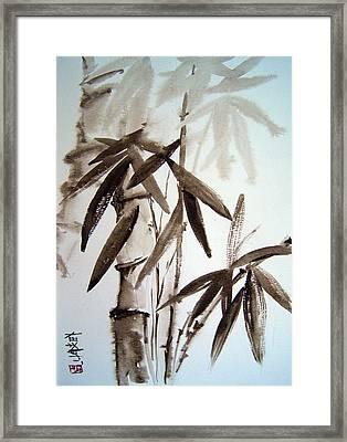 Bamboo Framed Print by Alena Samsonov