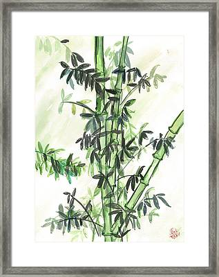 Bamboo Framed Print by Amberlyn How