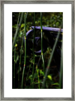 Bamboo And A Bench Framed Print by Tara Miller