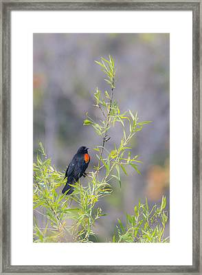 Bamboo And Bird Framed Print