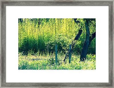 Bamboo Background Framed Print