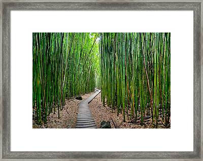 Bamboo Brilliance Framed Print by Sean Davey
