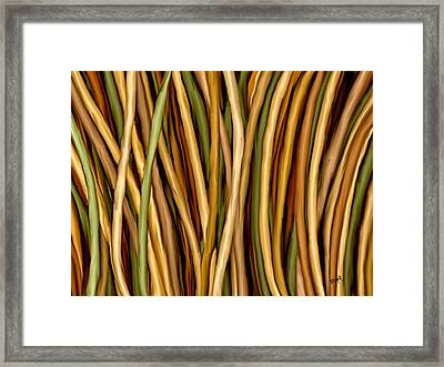 Bamboo Canes Framed Print