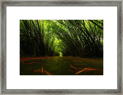 Bamboo Cathedral Framed Print by Dexter Browne