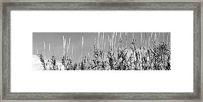 Bamboo Framed Print by Clare Bevan