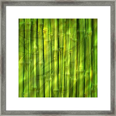 Bamboo Dream Framed Print