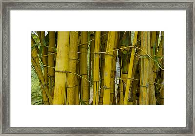 Bamboo Forest Framed Print by Aged Pixel