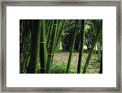 Bamboo Forest Framed Print by Andres LaBrada