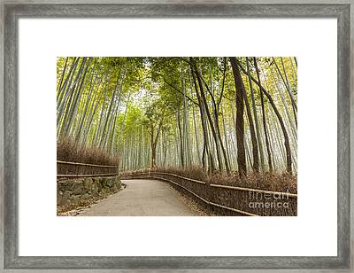 Bamboo Forest Arashiyama Kyoto Japan Framed Print by Colin and Linda McKie