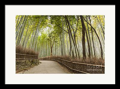 Bamboo Fence Framed Prints
