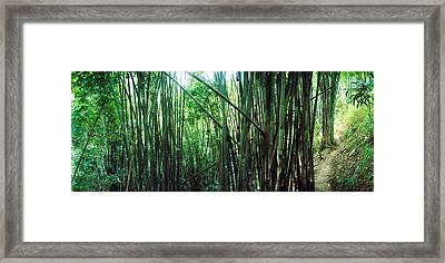 Bamboo Forest, Chiang Mai, Thailand Framed Print by Panoramic Images