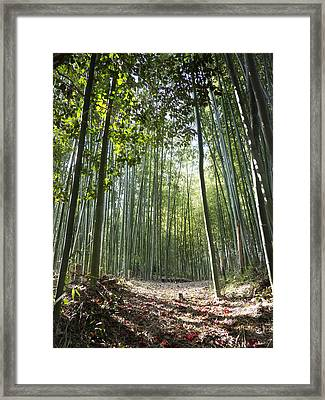 Bamboo Forest Framed Print by John Wong