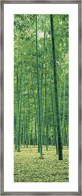 Bamboo Forest Nagaokakyo Kyoto Japan Framed Print by Panoramic Images