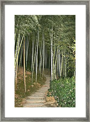 Bamboo Forest Pathway Framed Print