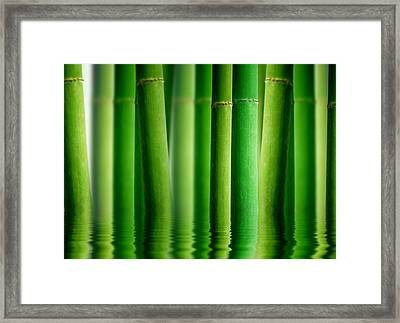 Bamboo Forest With Water Reflection Framed Print by Aged Pixel