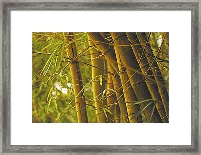 Bamboo Gold Framed Print