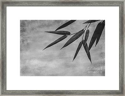 Bamboo - Gray Framed Print by Hannes Cmarits