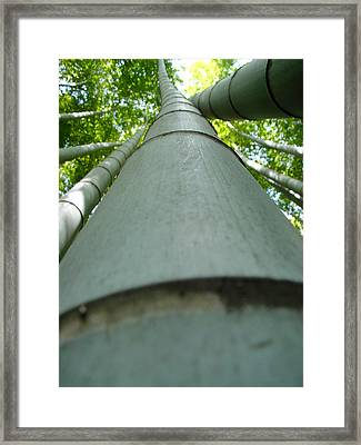 Framed Print featuring the photograph Bamboo Grove In Morning by Larry Knipfing
