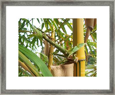 Bamboo  Framed Print by Heather Duncan