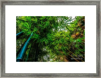 bamboo III - green Framed Print by Hannes Cmarits