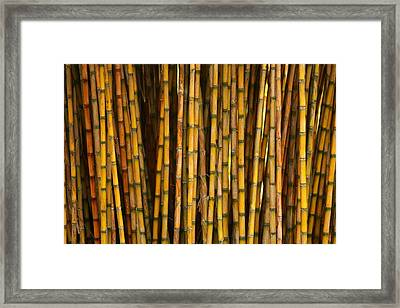 Bamboo Framed Print by Jacqui Collett