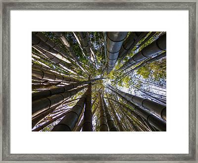 Bamboo Jungle Framed Print