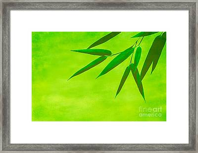 Bamboo Leaves Framed Print by Hannes Cmarits