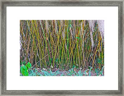 Bamboo Framed Print by Lorna Maza