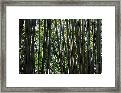 Bamboo  Framed Print by Nicholas Outar