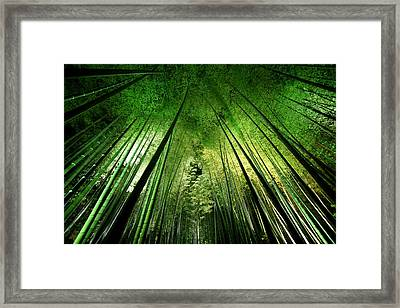 Bamboo Night Framed Print by Takeshi Marumoto