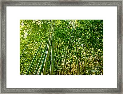 Bamboo Framed Print by Nur Roy