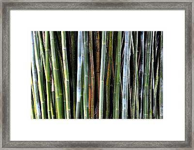 Framed Print featuring the photograph Bamboo Rainbow by Jodi Terracina