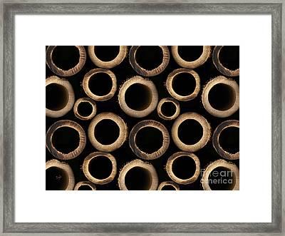 Bamboo Rings Framed Print by Bedros Awak
