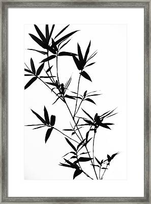Bamboo Shadows Framed Print by Jenny Rainbow