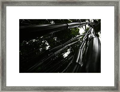 Bamboo Skies 5 Framed Print by Jennifer Bright
