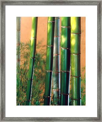 Bamboo Sticks Framed Print by Panoramic Images