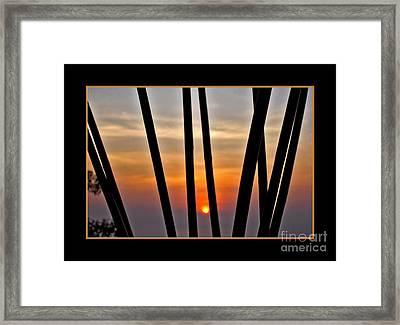 Bamboo Sunset - Black Frame Framed Print