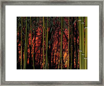 Bamboo Sunset Framed Print by Sharon Costa