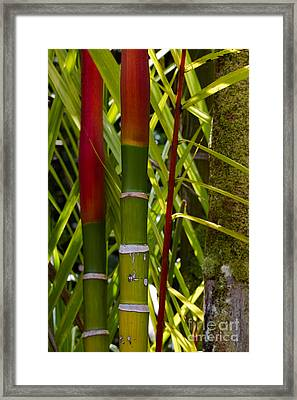 Bamboo Too All Profits Go To Hospice Of The Calumet Area Framed Print